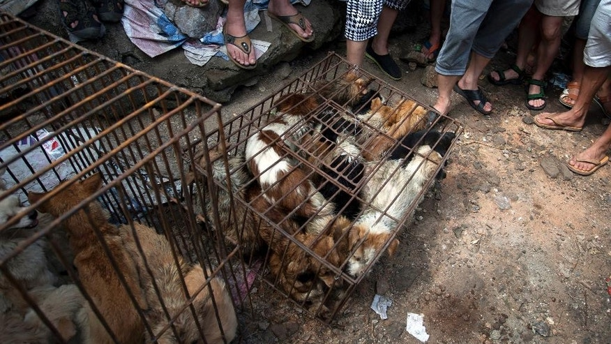 In this Sunday, June 21, 2015 photo, people stand near dogs in cages for sale at a market during a dog meat festival in Yulin in south China's Guangxi Zhuang Autonomous Region. Restaurateurs in a southern Chinese town are holding an annual dog meat festival despite international criticism. (Chinatopix via AP) CHINA OUT