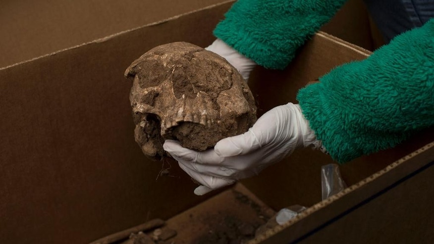 In this June 26, 2015 photo, an archaeologist shows a human skull unearthed on traditional Guarani indigenous land last year as workers from the French energy company Total E&P Bolivie prepared the ground for a natural gas flare. It is stored in a container on a company compound near Lagunillas in southern Bolivia. The company says 78 sets of human remains were unearthed and ceramic funeral earns found in a cemetery that likely dates back to before 600 A.D. (AP Photo/Juan Karita)