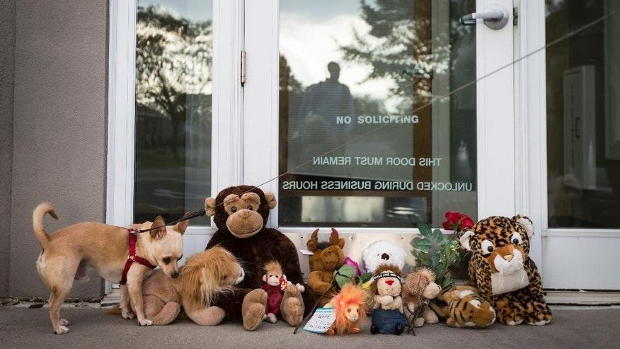 "Bernie the dog sniffs stuffed animals placed at the doorstep of Dr. Walter Palmer's River Bluff Dental office in Bloomington, Minn., Tuesday, July 28, 2015. Palmer, accused of illegally killing a protected lion in Zimbabwe, said Tuesday that he thought everything about his trip was legal and wasn't aware of the animal's status ""until the end of the hunt."" (Renee Jones Schneider/Star Tribune via AP)  MANDATORY CREDIT; ST. PAUL PIONEER PRESS OUT; MAGS OUT; TWIN CITIES LOCAL TELEVISION OUT"