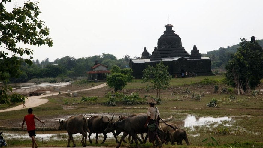 Local residents walk with buffalos near a pagoda in Myauk U, Rakhine State, western Myanmar, Tuesday, Aug 4, 2015. New devastation is feared in Myanmar as water from the badly flooded central and northern regions flows down rivers to the country's more populous areas. Officials say the death toll from weeks of almost continuous rain is 46, with more than 200,000 people affected by flooding in 11 of the country's 14 states and divisions.  (AP Photo/Khin Maung Win)