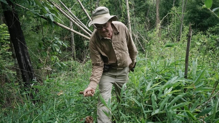 In this June 18, 2015, photo, Rod Beattie uses a machete to clear a walking path along what was the Death Railway in Nam Tok, Kanchanaburi province, Thailand. As the 70th anniversary of World War II's end approaches and its veterans dwindle by the day, Beattie, an Australian, still slogs along the 415 kilometer (257 mile) length of Death Railway where more than 100,000 Allied prisoners and Asians were enslaved by Japan's Imperial Army to build the line. With his own money, he maps its vanishing course, uncovers POW relics and with his vast database helps brings closure to relatives of those who perished and survivors who went to their graves never having shared their traumas. (AP Photo/Charles Dharapak)