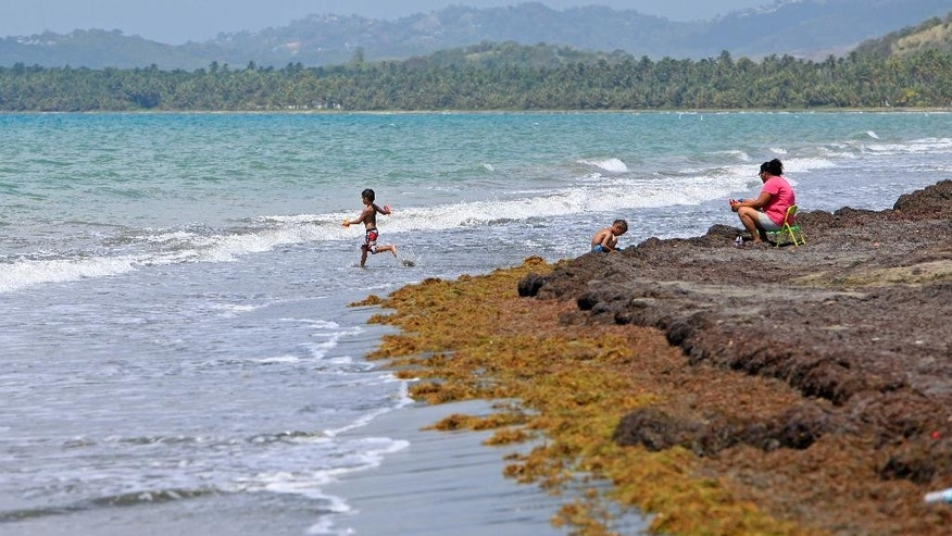 Aug. 8, 2015: Children play as their mother keeps an eye on them at a beach heavily covered with seaweed in the east coast town of Humacao, Puerto Rico.