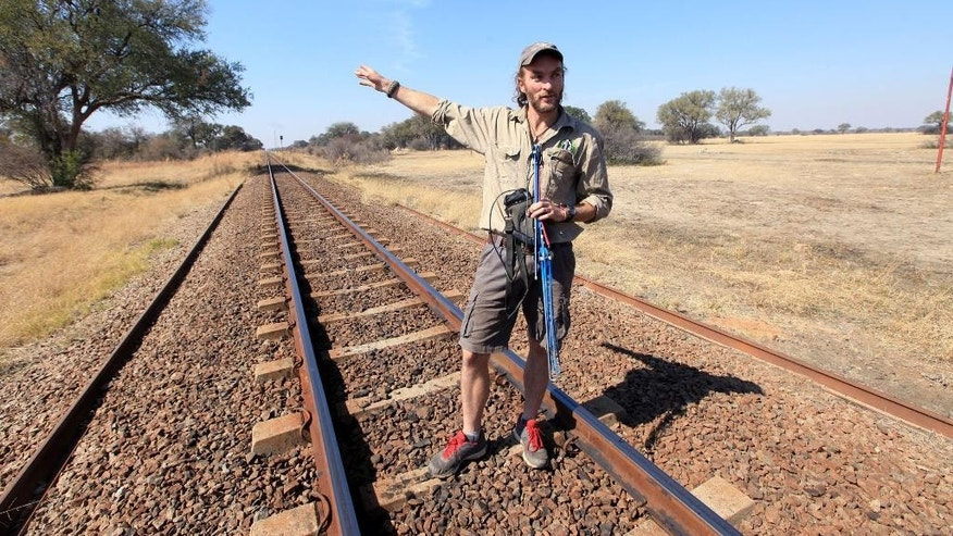Lion researcher, Brent  Staplekamp, holds an antenna while standing on the tracks that Cecil the lion crossed when he was lured onto a farm in an alleged illegal hunt in Hwange about 700 kilometres south  west of Harare, Zimbabwe, Thursday, Aug. 6, 2015. Cecil had to cross only a set of railroad tracks to go  from a protected area to a kill zone. The killing  of Cecil by an American hunter triggered  outrage far beyond Zimbabwes boarders and has strengthened resolve to enforce regulations governing hunting. (AP Photo/Tsvangirayi Mukwazhi)