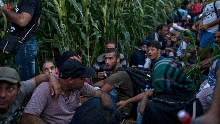 In this photo taken Tuesday, Aug. 11, 2015, migrants hide as they wait for the night to fall in a field of corn meters away from the Serbian-Hungarian border, in Horgos,  (AP Photo/Marko Drobnjakovic)