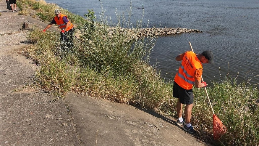 Cleaners collect waste and broken glass during cleaning of the Vistula River banks at a time when a record low water level has given access to usually immersed trash and objects in Warsaw, Poland, Wednesday, Aug. 19, 2015.(AP Photo/Czarek Sokolowski)