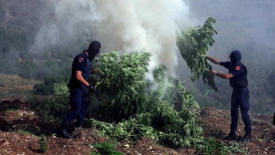 In this photo taken on Thursday Aug. 25, 2015, masked police officers burn cannabis plants in Kurvelesh commune, 200 kilometers (125 miles) south of the Albanian capital, Tirana. Albanian police found and destroyed some 16,000 cannabis plants and arrested a suspect. So far half a million cannabis plants have been destroyed since the government set fighting drug cultivation and trafficking as a top priority. (AP Photo/Hektor Pustina)