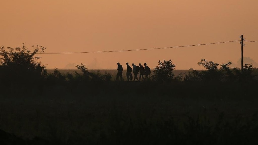 A group of migrants at dawn heading to cross a border line between Serbia and Hungary, near the village of Horgos, Serbia, Saturday, Aug. 29, 2015. Record numbers of migrants fleeing violence and poverty in countries such as Syria, Afghanistan and Eritrea are trying to reach Europe this year, despite the risks of perilous sea crossings and little humanitarian assistance. (AP Photo/Darko Vojinovic)
