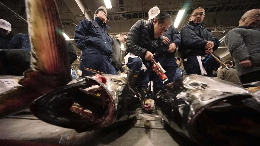 FILE - In this Jan. 5, 2015 file photo, prospective buyers inspect the quality of fresh tuna before the first auction of the year at Tsukiji fish market in Tokyo. An international body that monitors fisheries in most of the Pacific Ocean ended a meeting in Japan Thursday, Sept. 3, 2015, without agreement on fresh measures to protect the dwindling bluefin tuna. The Western and Central Pacific Fisheries Commission was unable to get a consensus on either short term or long term measures to help restore the population of the bluefin, whose population has fallen 96 percent from unfished levels, according to a release by the group. (AP Photo/Eugene Hoshiko, File)