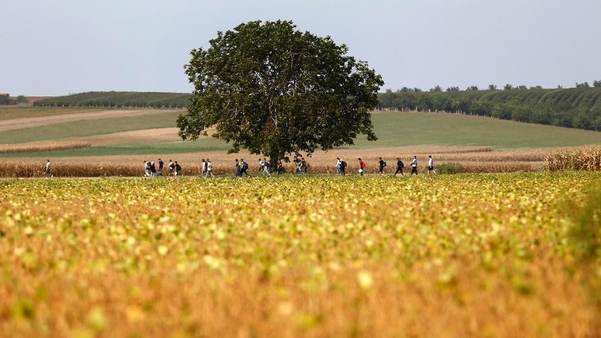 People make their way through fields at the border between Serbia and Croatia near Tovarnik, Croatia, Wednesday, Sept. 16, 2015. The first groups of migrants have started arriving in Croatia - a new entry point into the European Union after Hungary sealed off its border with Serbia with massive coils of barbed wire. (AP Photo/Matthias Schrader)