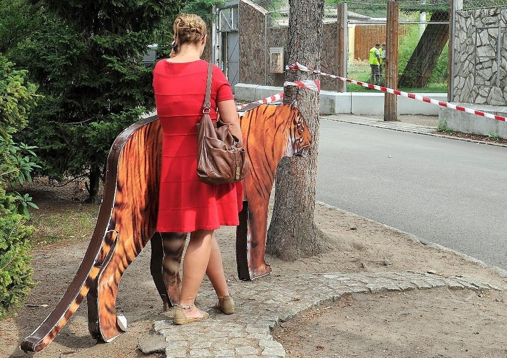 Tiger mauls worker in Poland zoo, day before conference of zoo directors