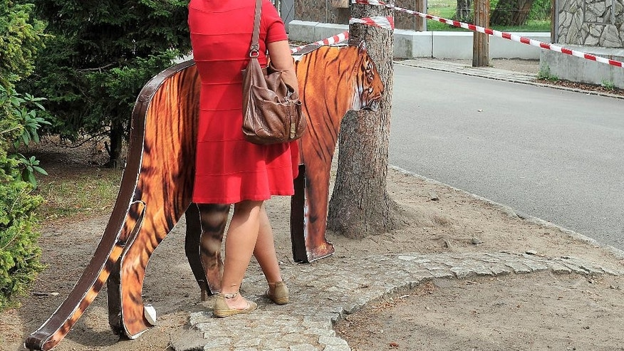 A reporter stands facing the Sumatran tigers' run where a tiger fatally wounded a keeper in Wroclaw, Poland, Wednesday, Sept.16, 2015. The police are inspecting the run, where the attack occurred in the morning, probably during the routine cleaning. (AP Photo/Natalia Dobryszycka)
