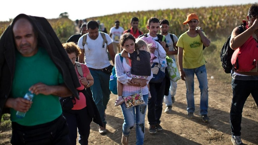 People trek through a corn field in order to get to Serbia's border with Croatia close to the town of Sid, Serbia, Friday, Sept. 18, 2015. Croatia on Friday closed all border crossings with Serbia except one in an effort to control the flow of migrants which has strained authorities. (AP Photo/Marko Drobnjakovic)