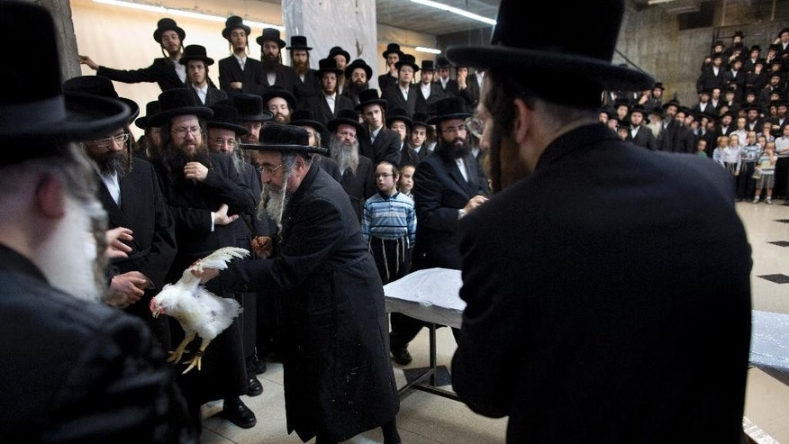 Ultra-Orthodox Jews of the Dorog Hassidic sect gather around a butcher just before he slaughters a chicken as part of the Kaparot ritual, in which it is believed that one transfers one's sins from the past year into the chicken, in the Ultra-Orthodox city of Bnei Brak near Tel Aviv, Israel, Tuesday, Sept. 22, 2015. The ritual is performed before the Day of Atonement, Yom Kippur, the holiest day in the Jewish year which starts at sundown Tuesday. (AP Photo/Oded Balilty)