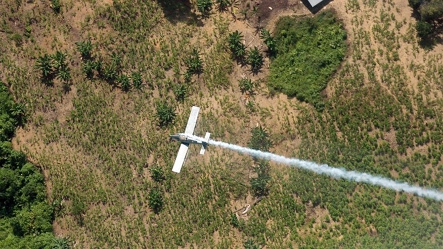FILE - In this June 4, 2008 file photo, a police plane sprays herbicides over coca fields in El Tarra, in the Catatumbo river area, near Colombia's northeastern border with Venezuela. Colombia's president Juan Manuel Santos announced Tuesday, Sept. 22, 2015, that the country is overhauling its anti-drug strategy, aiming to boost alternative development efforts and relying more on manual eradication to replace controversial U.S.-backed aerial spraying of the crop used to make cocaine. (AP Photo/Luis Robayo, File)