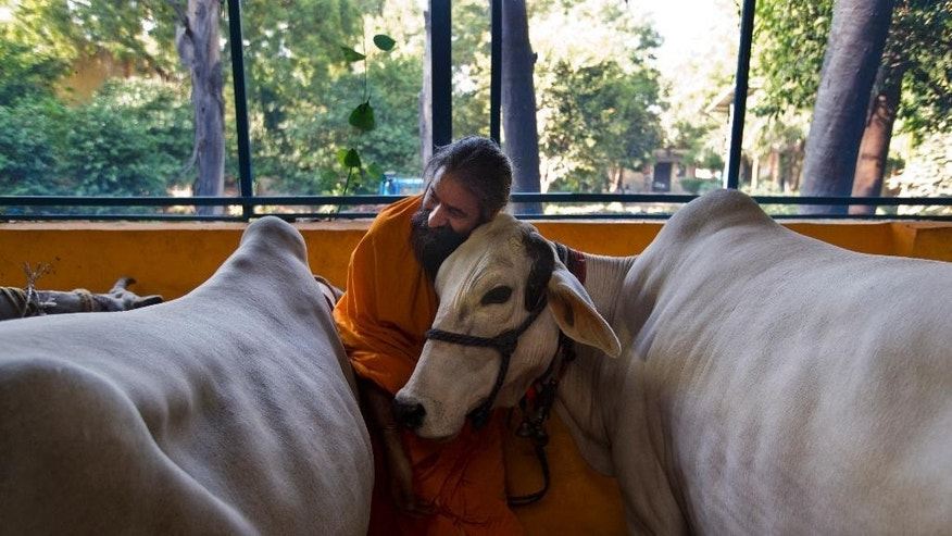 "In this Friday, Oct. 9, 2015 photo, a Hindu temple priest Ram Mangal Das caresses a cow at his 'Gaushala' or shelter for cattle, in New Delhi, India. ""We should drink cow's milk, not its blood,"" Das said. ""If someone attacks mother cow, or eats it, then this sort of reaction should happen,"" he said of the killing of a Muslim farmer who was rumored to have slaughtered cows, adding ""It is justified."" (AP Photo/Saurabh Das)"