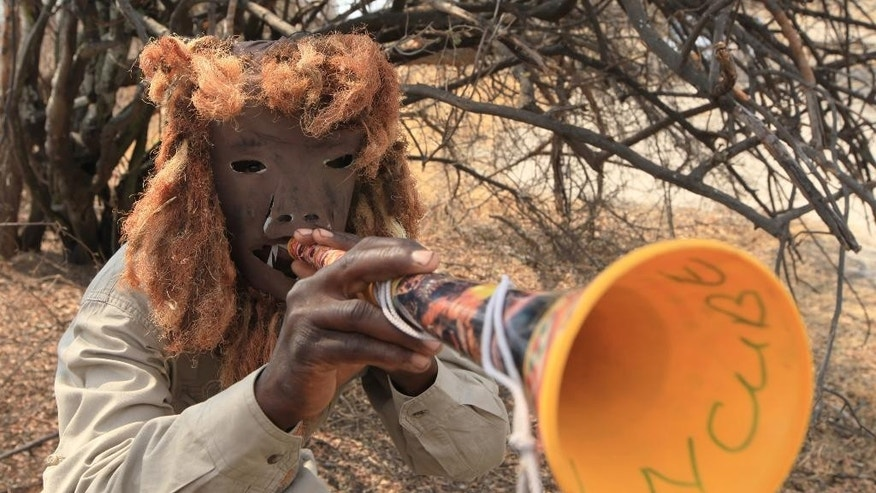 In this photo taken Tuesday Sept. 29, 2015 a lion guard, wearing a lion-like mask, demonstrates how he scares off lions using a plastic horn during a training session at their base in Hwange, south west of Zimbabwe's capital Harare. Zimbabwe's lion guards are brave community members selected and trained to prevent attacks on humans and cattle by big cats who stray from the unfenced Hwange park, which sprawls over 14,500 square kilometres  (5,625 sq. miles) in western Zimbabwe. (AP Photo/Tsvangirayi Mukwazhi)
