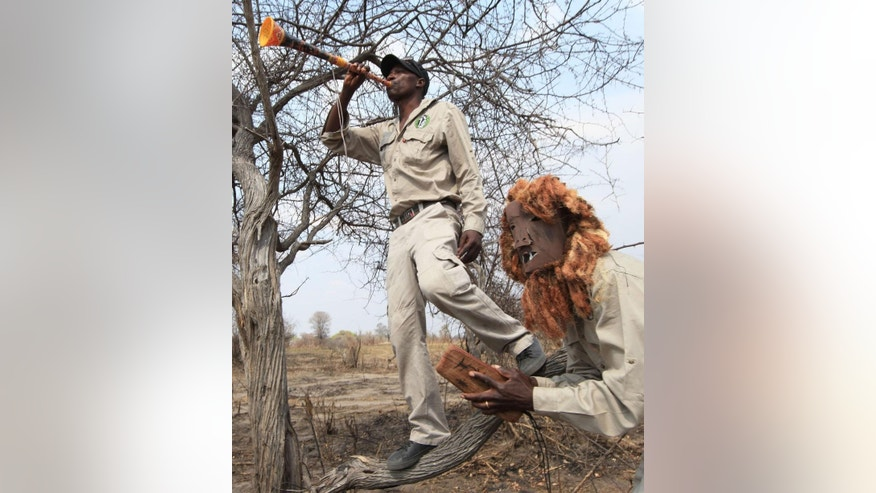 In this photo taken Tuesday Sept. 29, 2015 lion guards demonstrate how they scare off lions using a plastic horn and clapping wooden blocks during a training session at their base in Hwange, south west of Zimbabwe's capital Harare. Zimbabwe's lion guards are brave community members selected and trained to prevent attacks on humans and cattle by big cats who stray from the unfenced Hwange park, which sprawls over 14,500 square kilometres  (5,625 sq. miles) in western Zimbabwe. (AP Photo/Tsvangirayi Mukwazhi)