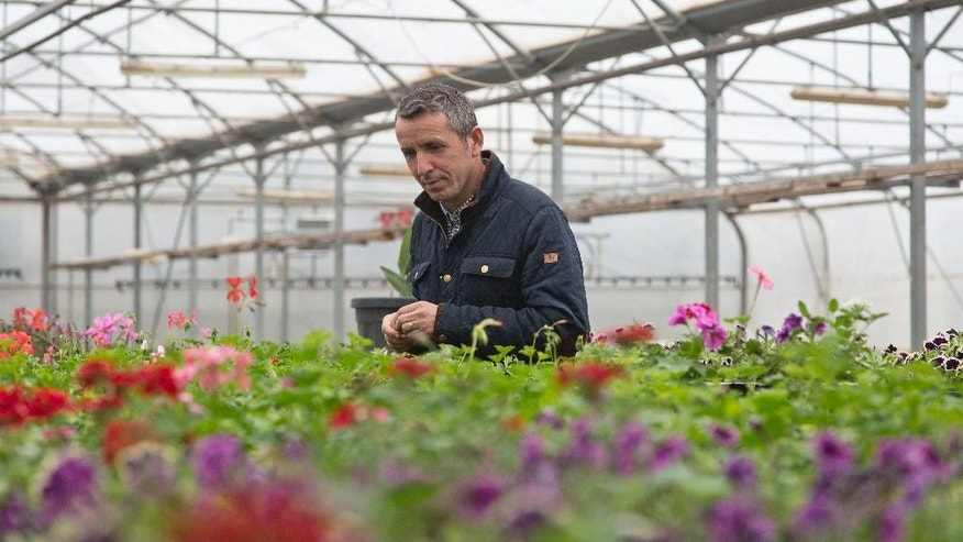 Luan Bucaj, owner of Las Palmas flower plantation, tends to his flowers in the village of Konjuh, Kosovo, Tuesday, Nov. 27, 2015. Kosovo signs a Stabilization and Association Agreement with the European Union, a historic milestone that will help the economic growth of one of Europe's poorest countries. Bucaj started the first contact with European clients to export his products to EU countries after bureaucratic barriers prevented him in the past years. (AP Photo/Visar Kryeziu)