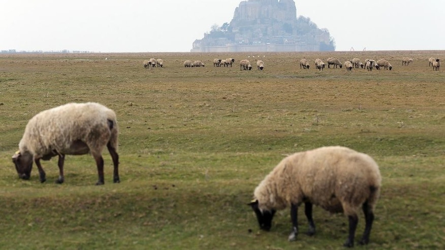 "FILE  In this March 9, 2015 file photo, sheeps graze in the fields called ""pres sales"" (salted field) leading to the Mont Saint-Michel, background, and its gothic abbey perched on a granite islet off the Normandy coast. French President Francois Hollande is scheduled to visit this unusual Atlantic fortress and tourist site of Mont Saint Michel, an island at high tide and a peninsula at low tide. He's there to finalize construction of a bridge meant to battle erosion and ensure the site's island status. (AP Photo/David Vincent, File)"