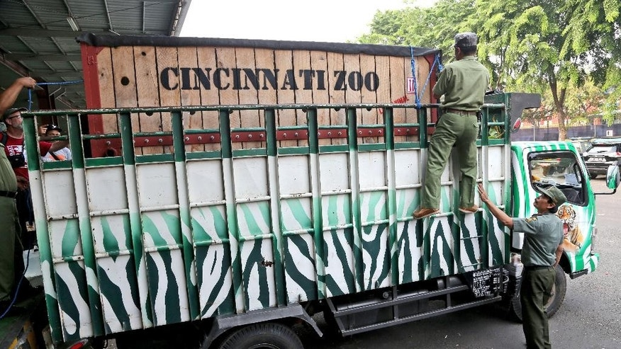 Workers load a travel crate containing an 8-year-old male  Sumatran rhino named Harapan (hope) onto a truck to be transported to Way Kambas National Park on Sumatra Island, upon arrival at the cargo terminal at Soekarno-Hatta Airport in Cengkareng, Indonesia, Sunday, Nov. 1, 2015. The U.S.-born Sumatran rhino has arrived in its ancestral home of Indonesia after a long flight from Cincinnati, Ohio, where it had lived at the city's zoo as the last Sumatran rhino in the Western Hemisphere. Harapan was brought to the country on a mission to mate to help preserve his critically endangered species from extinction. (AP Photo/Tatan Syuflana)