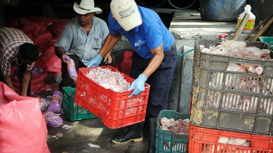 Workers unload raw chicken to be fed to crocodiles at a farm owned by the Rosenthal family in San Manuel Cortes, northern Honduras, Wednesday, Nov. 4, 2015. Thousands of crocodiles on the private farm have been poorly fed because of a lack of resources, according to authorities and employees at the property, after the bank accounts of the owners were seized during a probe into accusations they were operating a money laundering network linked to drug trafficking. Farm employees said the animals went without food for more than a month, but were finally fed over the weekend thanks to donations. (AP Photo/Fernando Antonio)