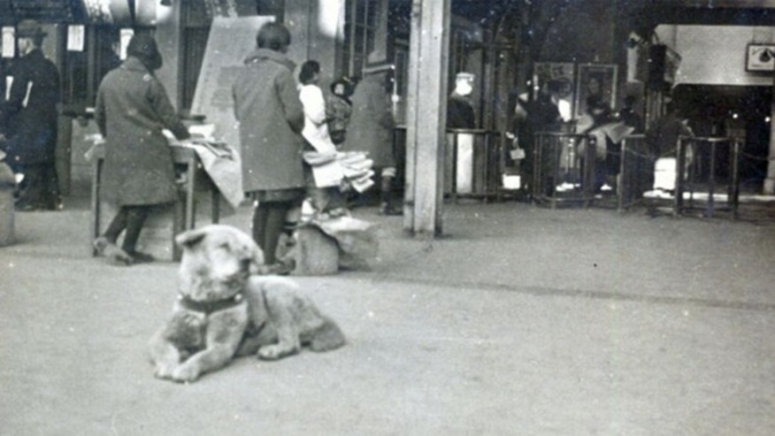 Isamu Yamamoto's photograph of Hachiko the Akita dog is shown. (Courtesy of Takeshi Ando)