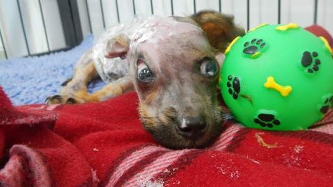 Puppy rescued after boiling water attack