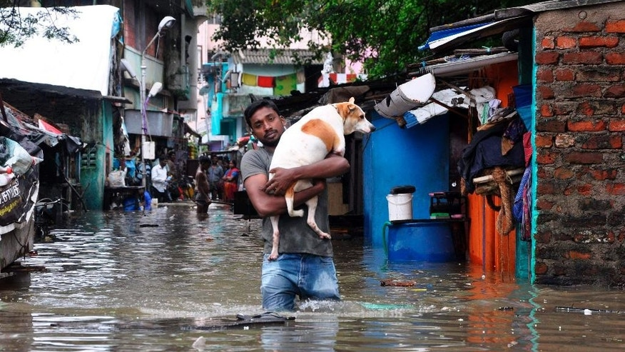 A man carries a dog and wades through a flooded street in Chennai, in the southern Indian state of Tamil Nadu, Wednesday, Dec. 2, 2015. Weeks of torrential rains have forced the airport in the state capital Chennai to close and have cut off several roads and highways, leaving tens of thousands of people stranded in their homes, government officials said Wednesday. (AP Photo)