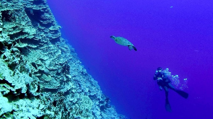 In this photo taken on Friday, Nov. 6, 2015, diver Hiroaki Ueda swims with a sea turtle on a reef near Majuro Atoll at the Marshall Islands. Diving in the Marshall Islands caters to all levels of skills from novice like this four- meter (13-foot) wreck dive to more complicated dives on World War II ship wrecks using mixed gas.(AP Photo/Rob Griffith)