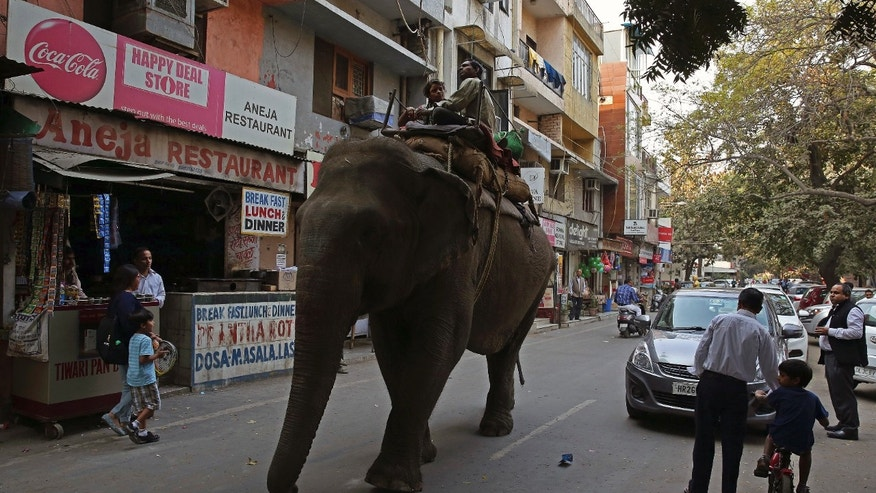 Elephant walks through an Indian village. (Reuters)