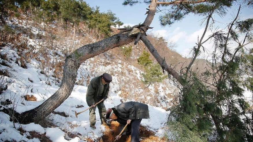 "In this Thursday, Dec. 3, 2015, photo, village elders Song Hong Ik, left, and Kim Ri Jun dig up remains from a burial site on Ryongyon-ri hill in Kujang county, North Korea. ""Until They Are Home"" is one of the most sacred vows of the U.S. military, yet there are 5,300 American GIs missing in North Korea from the Korean War whose remains are potentially recoverable. It has been more than a decade since any U.S. search teams have tried, and with construction projects across the country moving forward, many could already be lost forever. (AP Photo/Wong Maye-E)"
