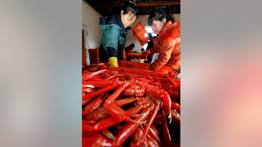 "In this March 12, 2016 photo, workers process crabs at the Sinpho Fishery station in Sinpho, South Hamgyong Province, North Korea. North Koreans are being mobilized en masse to boost production and demonstrate their loyalty to leader Kim Jong Un in a 70-day campaign aimed at wiping out ""indolence and slackness."" To show their loyalty, workers are putting in extra hours to boost production in everything from coal mining to fisheries. (AP Photo/Kim Kwang Hyon)"