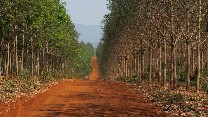 "In this Feb. 26, 2015 photo, a road runs through a rubber plantation operated by Socfin-KCD, a European-Cambodia joint venture, in Mondulkiri province in eastern Cambodia. In a global land rush, many countries have sold or leased huge tracts to foreign investors, sometimes forcing out those who lived there. Josie Cohen, land campaigner at Global Witness, which investigates economic networks behind environmental destruction, said such leases are ""altering the very fabric of rural societies"" in Cambodia and nearby Laos and Myanmar, with ethnic minorities often suffering the most. (AP Photo/Heng Sinith)"