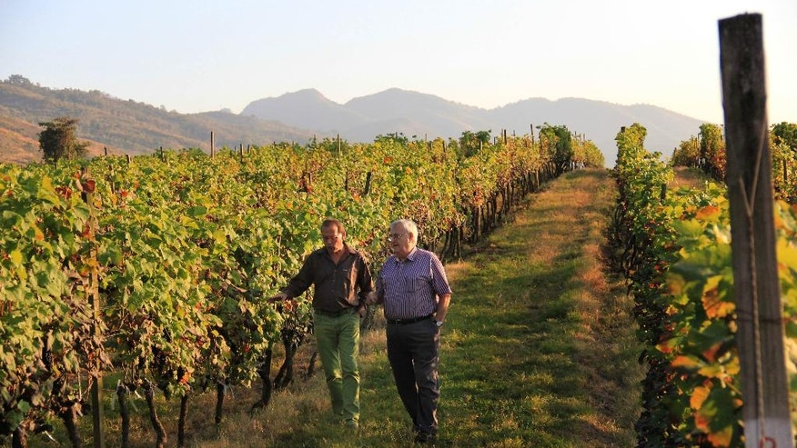 In this Tuesday, Feb. 2, 2016 photo, German winemaker Hans-Eduard Leiendecker, left and Bert Morsbach, right owner of Aythaya wine estate walk through the vines in Aythaya, near Taunggyi, northeastern Shan state, Myanmar. Myanmar's first ever winery, a pioneering effort by German entrepreneur Bert Morsbach who overcame both political minefields and viticulturally virgin terrain to find himself catering to a growing middle class and booming tourism that demand more wine than he can currently offer. He doesn't even have enough left over for export. (AP Photo/Esther Htusan)