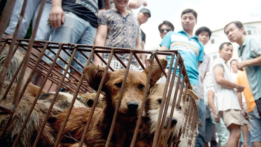 FILE - In this June 21, 2015, file photo, dogs in cages are sold by vendors at a market during a dog meat festival in Yulin in south China's Guangxi Zhuang Autonomous Region. Animal rights activists on Monday, April 4, 2016, are seeking to shut down an annual summer dog meat festival in southern China blamed for blackening the country's international reputation as well as fueling extreme cruelty to canines and unhygienic food handling practices. (Chinatopix via AP, File) CHINA OUT