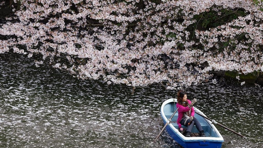 FILE - In this Monday, April 4, 2016, file photo, a woman takes a photo on a boat through a sea of cherry blossom petals in the Imperial Palace moat in Tokyo. People all over the country are photographing the blossoms as the country's iconic flower is full bloom. (AP Photo/Shizuo Kambayashi, File)