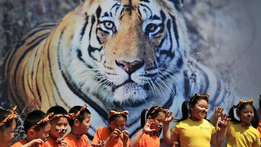May 29, 2010: Schoolchildren with tiger's ears headbands gesture in front of a tiger poster during an event to encourage people to protect the endangered wild tiger species around Asia held at the National Animal Museum in Beijing, China.