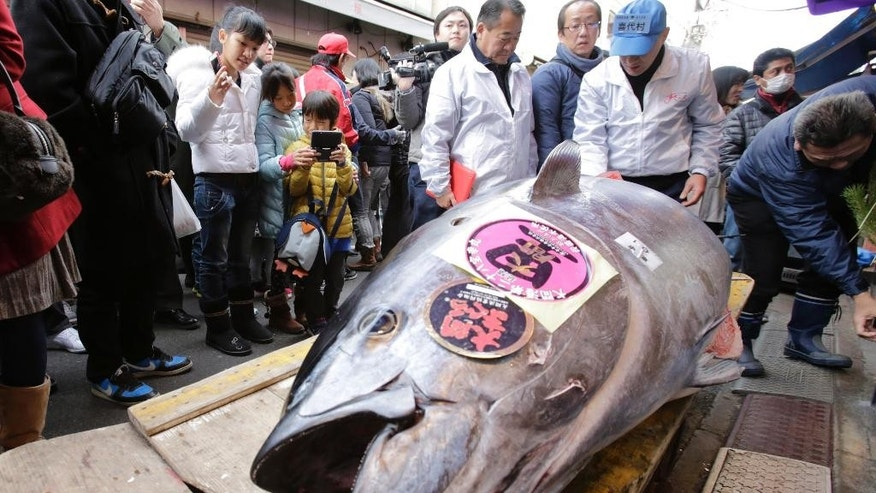 FILE - In this Jan. 5, 2014, file photo, people watch a bluefin tuna laid in front of a sushi restaurant near Tsukiji fish market after the year's celebratory first auction in Tokyo. The latest assessment by scientists paints a likely bleak future for the Pacific bluefin tuna, the favorite of sushi-lovers whose population has dropped by more than 97 percent from its historic levels. (AP Photo/Shizuo Kambayashi, File)