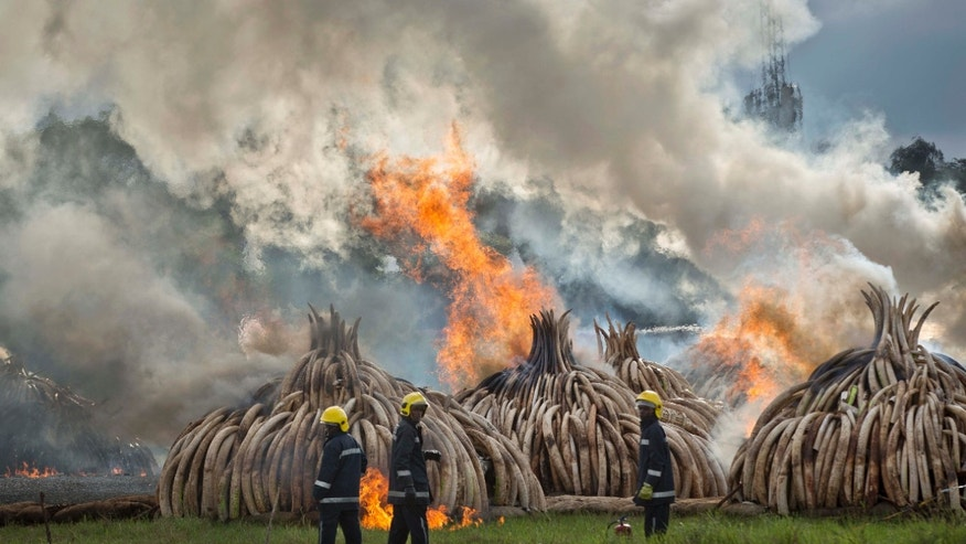 April 30, 2016: Firemen stand by at the ready as pyres of ivory are set on fire in Nairobi National Park, Kenya.