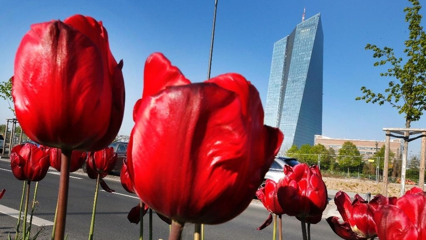 Tulips stand in front of the headquarters of the European Central Bank in Frankfurt, Germany, Monday, May 2, 2016. (AP Photo/Michael Probst)