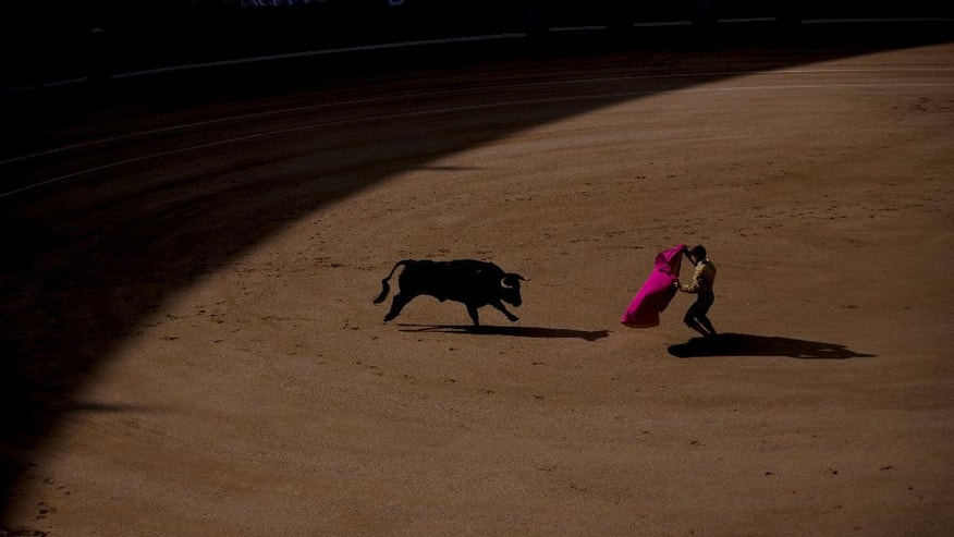 In this photo taken on Sunday, April 24, 2016, a bullfighter performs with a Los Rodeos ranch's fighting bull during a bullfight at the Las Ventas bullring in Madrid, Spain. As matadors face half-ton bulls this month during Madrid's most important annual series of bullfights and Pamplona gears up for its chaotic July bull runs, tensions are building between anti-bullfighting forces and the traditions' defenders. (AP Photo/Francisco Seco)