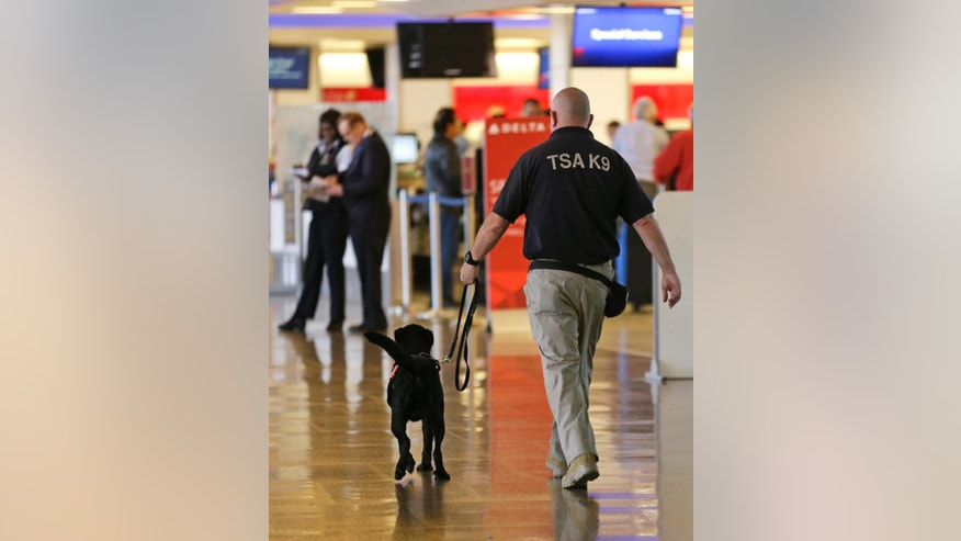 A Transportation Security Administration K9 official walks with a security dog, Thursday, May 19, 2016 through a ticketing area at Seattle-Tacoma International Airport in Seattle. (AP Photo/Ted S. Warren)