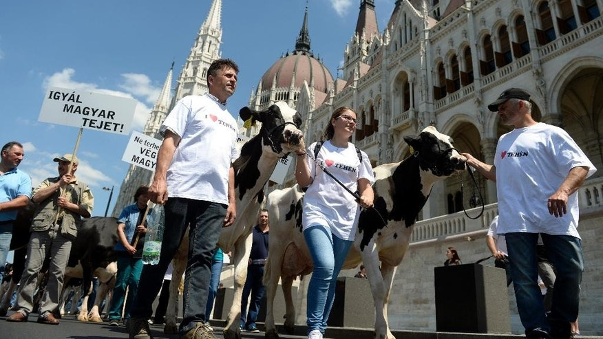 "Hungarian dairy farmers protest against the low acquisition price of milk in front of the Parliament in Budapest, Hungary, Monday, May 23, 2016. The inscription on the banner reads: ""Drink Hungarian Milk!"" (Tamas Kovacs/MTI via AP)"
