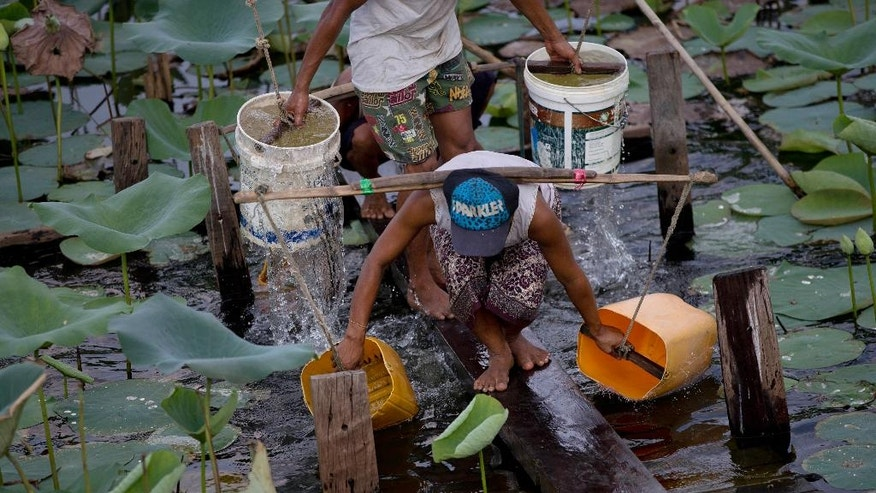 In this May 12, 2016 photo, a man and a woman fill their plastic containers hung on their shoulders with drinking water from a lotus-filled pond in Dala township, south of Yangon, Myanmar. Myanmar's dry season, which typically runs from April through May, has been compounded this year by an El Nino-induced drought that added several months to the water shortage affecting Dala township. (AP Photo/Gemunu Amarasinghe)