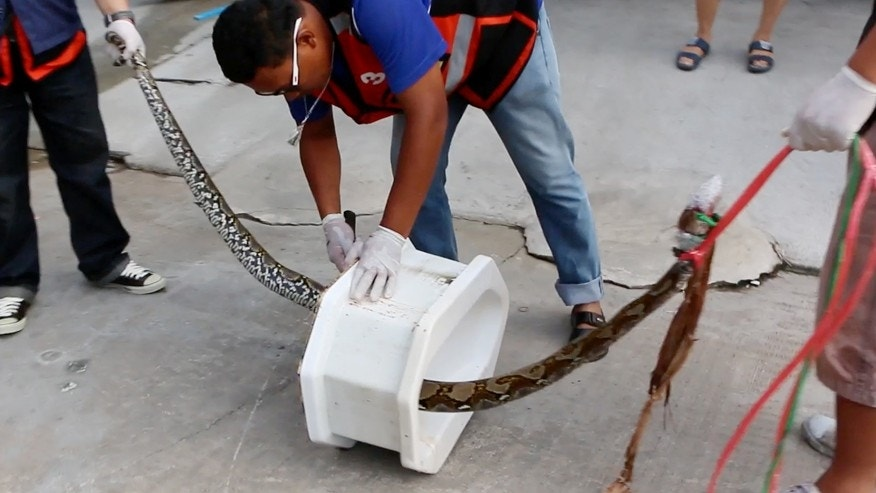 May 25, 2016: Rescue workers remove a python from a toilet outside a home in Chachoengsao