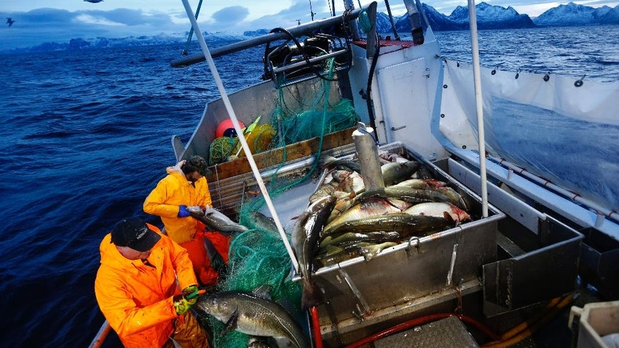 FILE - This  is a Jan 1, 2016 file photo of  Gunnar Johansen, left,  and Trond Dalgard fish for cod in the Norwegian Sea near Gryllefjord, northern Norway. Ahead of a June 23 referendum on whether to quit the European Union, Britons are looking across the North Sea to Norway for clues on what life could be like outside the bloc. The oil-rich Norwegians clearly have done OK. A free-trade deal ensures they enjoy almost the same access to the union's giant market as had they been EU members. (Cornelius Poppe / NTB scanpix via AP) NORWAY OUT