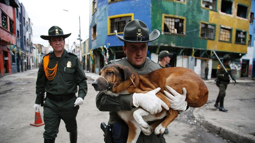 A police officer carries a dog that was rescued from El Bronx, a neighborhood plagued by drug addicts and prostitution, in downtown Bogota, Colombia, Thursday, June 2, 2016. Days after the police raided the streets of Colombia's largest open-air drug market, authorities returned to rescue the abandoned dogs and cats. The goal is to get the animals adopted. (AP Photo/Fernando Vergara)