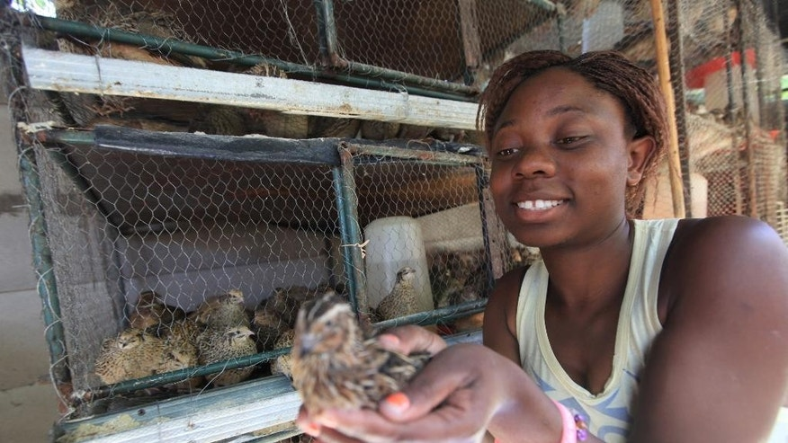 Gwynn Kariwo holds a quail bird in her hands at her home in Highfield, Harare, in this Friday, May, 13, 2016 photo. Kariwo who has backyard cages full with Quail birds in Harare's poor suburb, says she prefers selling the eggs because they are profitable.Thousands of unemployed people are looking to the quail as a deliverance from the dire economic conditions in this southern African country. (AP Photo/Tsvangiryi Mukwazhi)
