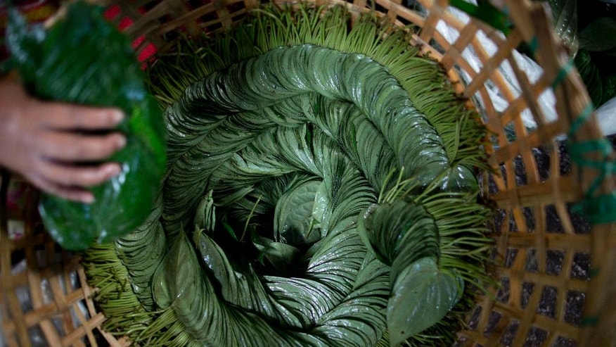 In this Friday, June 3, 2016 photo, a vender stacks betel leaves in a basket at a market in suburban Yangon, Myanmar. The bright green betel leaves, as large as an adult palm, normally cost $1.8 to $2.5 per kilogram (2.2 pounds). But because of a shortage the price has gone up nearly four times to 11,000 kyat or $9 per kilogram. (AP Photo/Gemunu Amarasinghe)