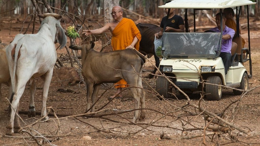 Phra Wisutthi Sarathera throws food to animals.